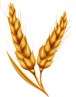image of wheat